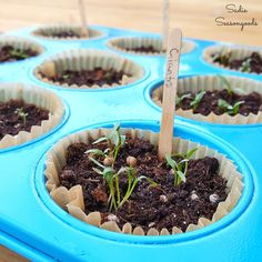 Repurpose / upcycle a rusty, crusty muffin tin from the thrift store as a perfect way to germinate your herb and vegetable seeds for your summer garden!