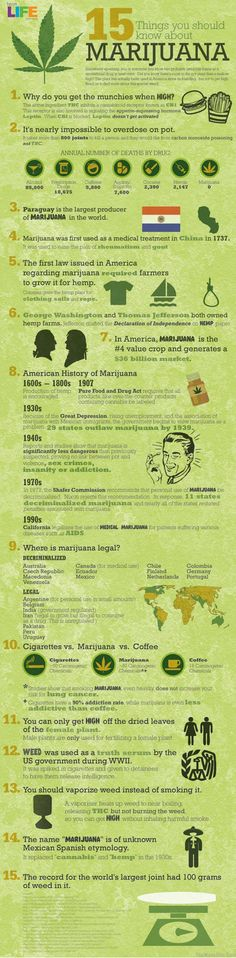 15 Things You Should Know About Marijuana. For thousands of years, marijuana or cannabis has been used for different purposes, including medicinal purposes. Check out some interesting facts about it: {Infographic} Medical Marijuana, Marijuana Facts, Weed Facts, Marijuana Funny, Black Soldier Fly, Endocannabinoid System, Info Board, Smoking Weed, Chickens Backyard