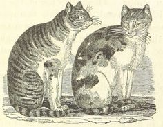 """This blog was created to share stories and cat care advice with other """"old maid cat ladies"""" out there, and to support the Old Maid Cat Lady online store."""