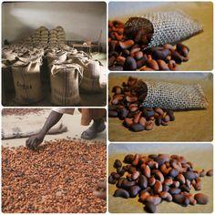 Links: echte cacaobonen die gesorteerd worden + in jute zakken gestopt worden. Rechts: cacaobonen (fimo klei) die in zelfgemaakte mini jutezakken kunnen gestopt worden door de kleuters + daarna vervoerd worden met de vrachtwagen/boot.