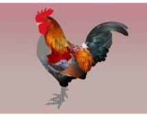 L'illustration A4 coq imprimée sur papier Fine Art / Rooster illustration print on Fine Art paper