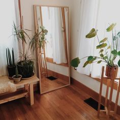wood interiors and plants