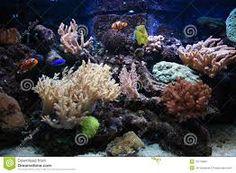 Aquarium Aquarium Backgrounds, Goldfish, Herbs, Poster, Products, Herb, Movie Posters, Gadget, Spice