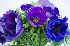 Anemone blue purple Lavender Flowers, Cut Flowers, Purple, Blue, Seasons, Seasons Of The Year, Viola