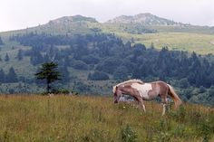 Grayson Highlands State Park and the wild ponies of Southwest Virginia...one of Andy's favorite places