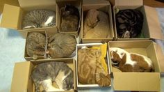 sleeping cats! 9 of them