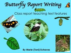 Butterfly Report Writing by Marie Echaves Social Studies Resources, Reading Resources, Teacher Resources, Science Activities, Classroom Activities, Science Fun, Kids Education, Elementary Education, Butterfly Life Cycle