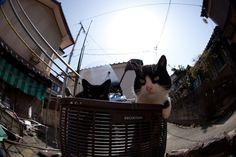 """50 fotos increíbles de """"la isla cielo de los gatos"""" en Japón"""