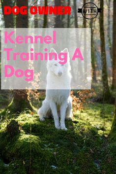 Helpful Advice For Anyone Who Has A Pet >>> You can find out more details at the link of the image. Kennel Training A Dog, Crate Training, Dog Training Tips, Stress And Anxiety, Dog Owners, Stuff To Do, Have Fun, Advice, Puppies