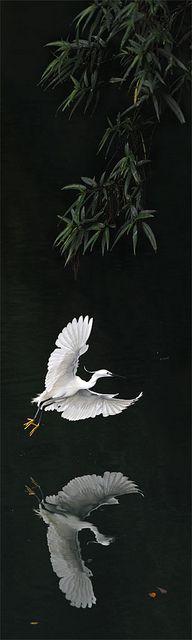 Little Egret - (CC)John & Fish - www.flickr.com/photos/johnfish/5881237751/in/set-72157626716174600#