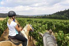 Paardrijden in de Kaapse Wijnlanden