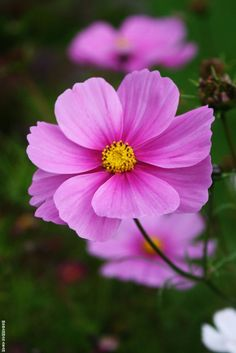 Flower 4 by Mohammad Azam