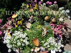 Listing of plants by zone suitable for   fairy gardens -- I've been looking for a list like this  :)