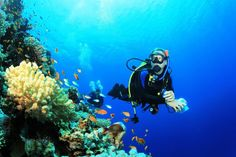 Want a diver's view of a coral reef, but not ready for scuba? Explore the beauty of the undersea world without scuba diving gear. Monuments, Snowboard, Belize, Long Car Rides, Destination Wedding Locations, Mexico Vacation, Snorkelling, Koh Tao, Great Barrier Reef