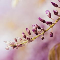 Fine Art Photography print  purple photo prints  by mylittlepixels, $13.00