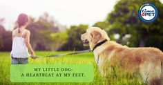 """""""Love is a four legged word"""" #timeforpet #dogs #dog #doglove #doglovers #animallovers #animals #animallove #quotes #animalquotes #quoteoftheday #petcare #petlove #pet #pets #bangalore #saturday #weekend"""
