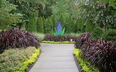 Princess Caroline Purple Fountain Grass - Pennisetum - 1 Gallon - Pennisetum - Fountain Grasses