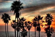 palm trees #california