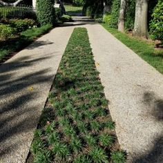Make sure you visit our domain for way more with regard to this mind-blowing artificial grass walkway Driveway Landscaping, Landscaping With Rocks, Landscaping Tips, Rock Driveway, Permeable Driveway, Dwarf Mondo Grass, Low Maintenance Backyard, Drought Tolerant Landscape, Artificial Turf