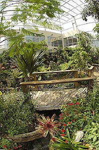 The Florida Museum of Natural HIstory is home to the Butterfly Rainforest, home to hundreds of living butterflies from around the world #Gainesville #UF