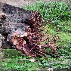 بين الحياة والموت Firewood, Texture, Pictures, Crafts, Woodburning, Surface Finish, Arts And Crafts, Artesanato, Wall Art Crafts