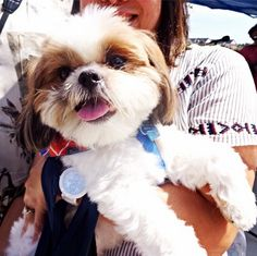Congratulations to the winner of our Cutest Dog contest, Mushu! We announced the top 3 cutest dogs on August 16th at @brambletonview during WagFest II. A big thank you to everyone who came out!