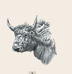animal photo collection for Animal + All Animals Photos, Animals Images, Animal Cards, Stuffed Animals, Animal Drawings, Moose Art, Pictures, Collection, Adverbs