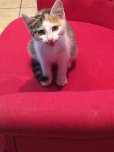 Adorable kitten found in a tree in a ditch in Duncormick, Wexford. Very friendly. About 3 months old. Will keep her if owner not found. Call if…