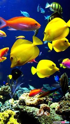 The vibrant yellow fish, loved the silhouette. vibrant, exotic A Tropical fish ecosytem.I love tropical fish because I love the many colors of fish there are. Life Under The Sea, Under The Ocean, Sea And Ocean, Fish Ocean, Fish Fish, Sea Fish, Underwater Creatures, Underwater Life, Ocean Creatures