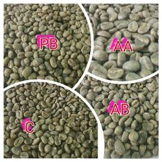 Kenyan Coffee: The Myths and Facts in your Cup – Agrofoodious International Coffee Organization, Kenyan Coffee, Coffee Prices, Best Beans, Coffee Health Benefits, Coffee Tasting, Instant Coffee, Perfect Cup, Loose Leaf Tea