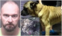 A Greenville man is facing animal cruelty charges after one dog was found deceased and another in poor physical condition in his backyard.Matthew Blackman, 38, ...