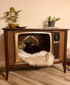 Animal Gato, Cat Room, Vintage Tv, Cat Furniture, Old Tv, Cats And Kittens, Cute Cats, Thrifting, Cute Animals