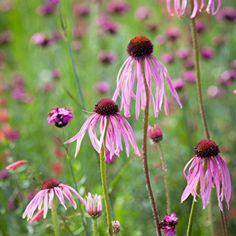 Flower Seeds to Sow | Sarah Raven