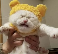 A Marvelous Menagerie: 53 Of The Most Interesting Animal Photos You Will See Today – Animals Cute Baby Animals, Animals And Pets, Funny Animals, I Love Cats, Cool Cats, Baby Cats, Cats And Kittens, Baby Kitty, Gatos Cool