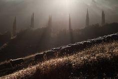 """I'm not a photographer. I'm a shepherd.""  Marco Sgarbi | Feature Shoot"
