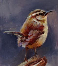 Little Carolina Wren - Original oil painting. $150.00, via Etsy.