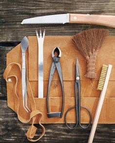 Tools of the Trade :: bonsai...You have a beginners set...just think of the mayhem you could reek with the master tool kit :) :)