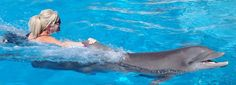 Gulf World Marine Park in #PanamaCityBeach is one of the few places nationwide where you have the opportunity to swim with a dolphin!