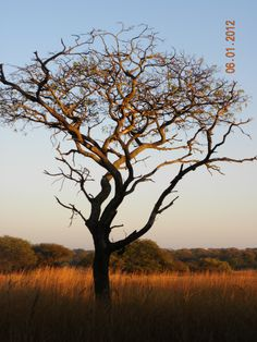Zimbabwe Sunset (Antelope Park)