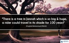 """""""There is a tree in #Jannah which is so big & huge, a rider could travel in its shade for 100 years"""" - Prophet Muhammad (PBUH)"""