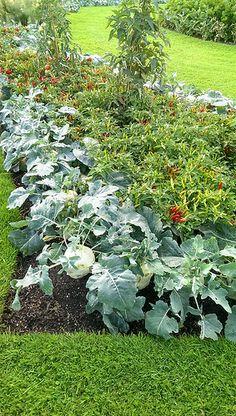 awesome Kew Gardens, vegetable gardens / http://www.everydaygardening.net/kew-gardens-vegetable-gardens-4/