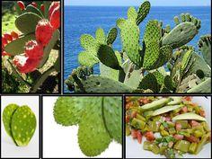 El nopal planta oriunda de México, de ahí llevada a otros países de América. En mi país República Dominicana le llaman tuna o alquitira, es muy usada en remedios caseros. Esta planta es de gran tamaño alcanzando los 7 metros de altura. De hojas achatadas, se cultiva en terreno árido por su condición de cactus, …