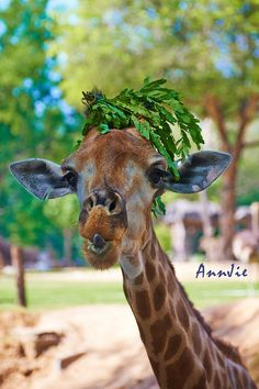 (via 500px / Giraffe Hat by AnnJie)