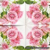 Rose, Flowers, Plants, Pink, Roses, Planters, Flower, Plant, Planting