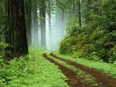 Shadows magick place: Open the Roads for me ( Road Opening, Abre Camino Spells and Products )