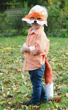 Beau petit renard