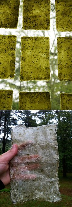 Handmade paper from plants!