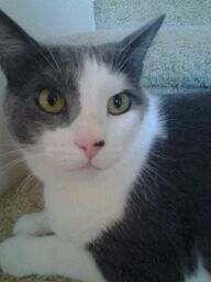 Kittie!!!