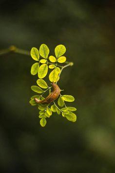 #snail #rainyday #leaf #intothenature #macro