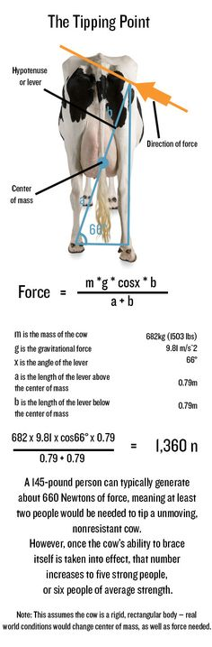 Is Cow Tipping Real? Physics says you'd have more luck tipping a Camry.